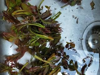 春天特色\炸香椿鱼,剪掉根部洗干净控水。