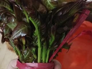 香椿蔬菜蛋皮卷,准备新鲜香椿一把。