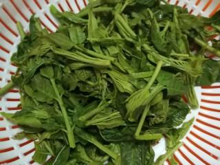 香椿蔬菜蛋皮卷,焯水后的香椿沥干待用。