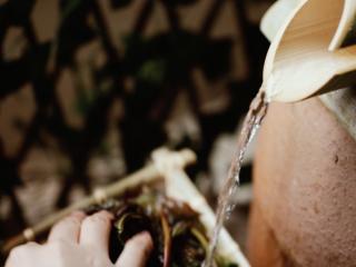 【谷雨·香椿鱼儿】谷雨落时,一口香椿一口茶,清水洗净;