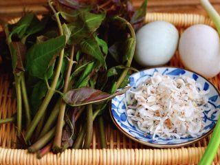 香椿虾皮炒鸭蛋,首先把食材准备好,先把香椿的外叶去干净,小香葱去皮后备用,再准备好鸭蛋和淡干虾