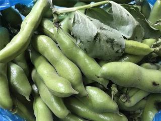 清炒蚕豆,这个就是新鲜采摘下来的蚕豆,还带着叶呢,非常新鲜。
