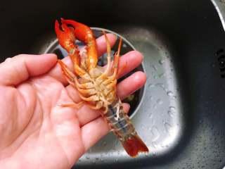 麻辣小龙虾,接着用水清洗小龙虾,边冲水边用刷子刷洗小龙虾,沥干水备用。