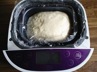 蔓越莓牛奶卷#无黄油版#,搓圆、加盖用室温发酵至2.5倍大