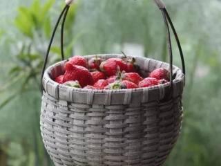 草莓酱 留住春天的味道,虚心谷采摘的草莓