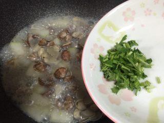 蛤蜊冬瓜汤,加入香菜