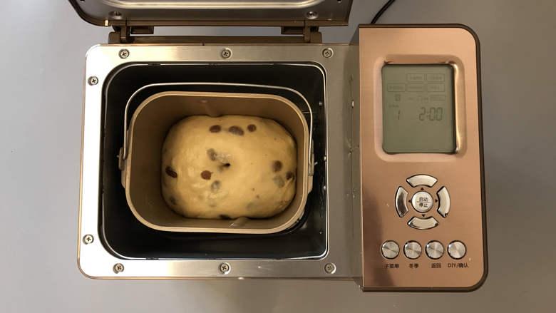 面包机版咕咕霍夫面包,发酵结束。