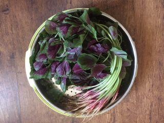 蒜蓉苋菜,苋菜用清水泡10分钟,然后清洗干净,沥干水分。 清洗叶子时动作要轻,叶子很薄,容易破损。