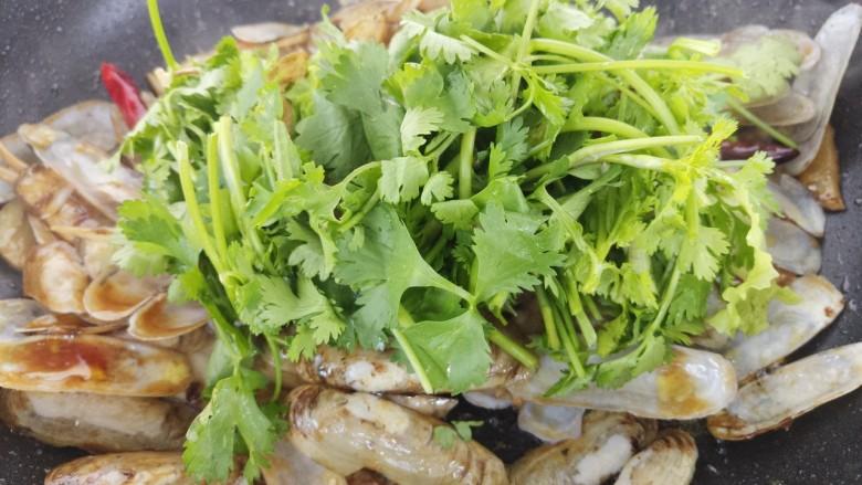 蚝油炒蛏子,再加入香菜。