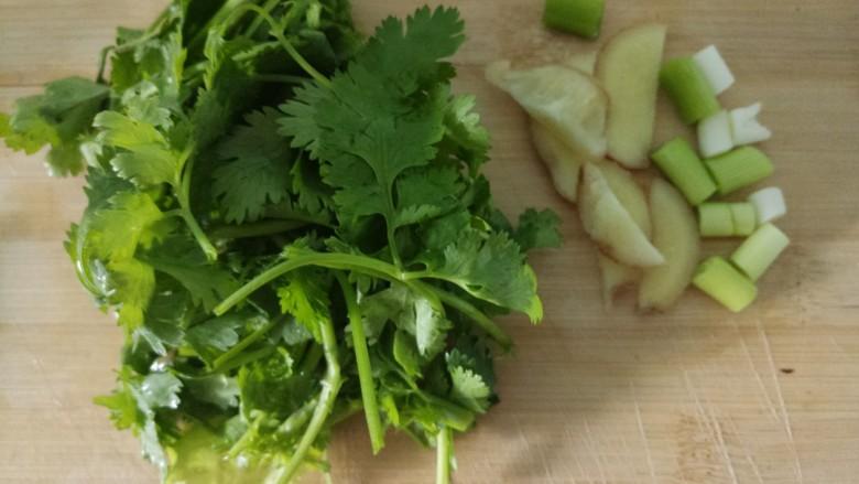 蚝油炒蛏子,把香菜切成末,把姜切成姜片,葱切成葱花。
