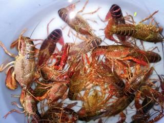 麻辣小龙虾,小龙虾买回来放点盐水浸泡一会儿,再用刷子把小龙虾脏的地方刷干净