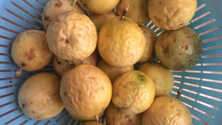 百香果蜜与百香果柠檬茶,2.取百香果1250克,即2.5斤。  小提示:表面光滑的百香果放置通风处几天,待表皮变皱了再制作,这样甜度更高,果香更浓郁。