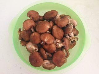 美味小零食  孜然香菇,香菇放入盆中