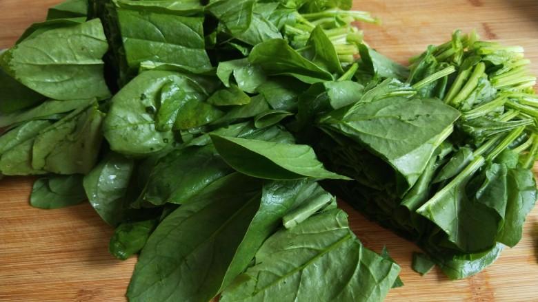 新文美食  菠菜凉拌粉丝,菠菜切成段。