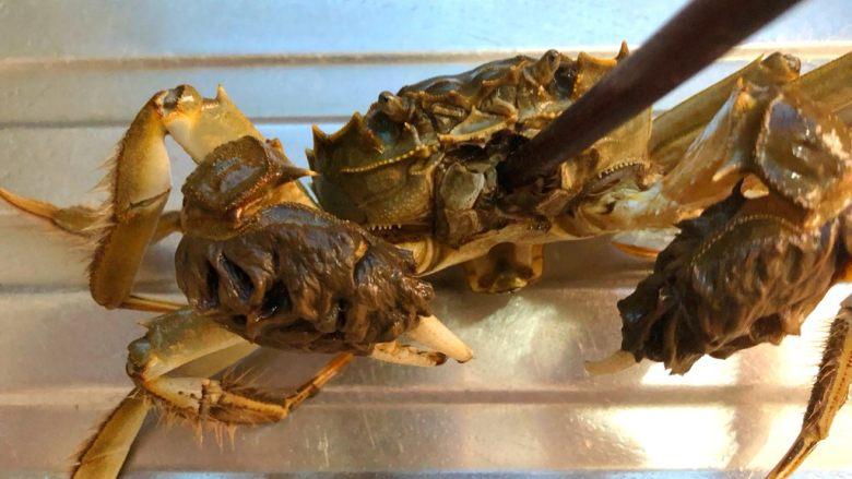 油焖大闸蟹,用筷子从大闸蟹的嘴部插入,要插到底,等大闸蟹不动了就可以拔出来