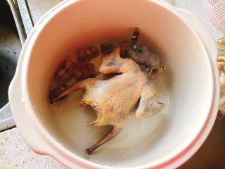 百合炖鸽子-滋补好汤,洗好后放入炖锅中。
