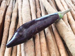 宝宝健康食谱  肉末茄子,紫皮长茄子1个