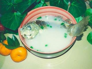 浓郁奶白鲫鱼汤,鲫鱼汤出锅了!