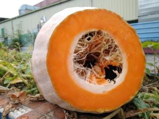 南瓜糯米糍,切开是橙色的,很诱人吧😊。