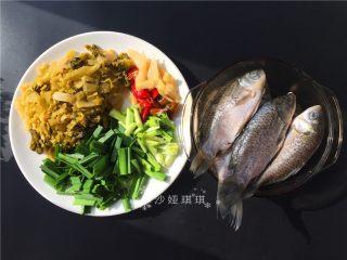 酸菜烧鲫鱼,准备材料,将鲫鱼去鳞洗净抹上料酒腌制一会儿。配菜切成如图所示。