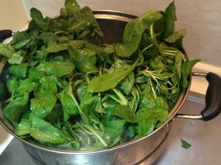 从零开始包馄钝—荠菜冬笋虾皮鲜肉馄钝,洗好的齐菜放入锅中。