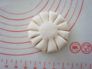花开富贵馒头,用刮面板沿着周边均匀的切出刀口,刀口长度不要太长,切到面饼的3/5处即可,中央处保留不要切断,形成花瓣状。