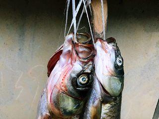 酸菜鱼#年年有鱼#,表弟钓的鱼有点小,处理后晾起来。