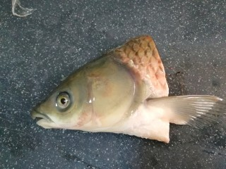 砂锅鱼头豆腐煲,鱼头洗干净,刮去鱼鳞
