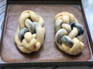 黑芝麻辫子面包,编好的样子,放入温暖湿润的地方进行二次发酵。(烤箱内放一碗热水,温度不超过40度)