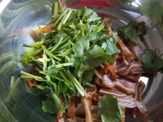 凉拌猪耳  新文美食,猪耳放入盆中,加入香菜,蒜末。