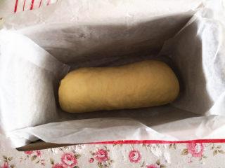 黑钻吐司,吐司盒用油纸铺垫好,把卷好的吐司卷放进去,进行二次发酵,室温23度,采用室温发酵,发酵至原来2倍大即可,