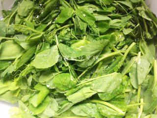 南乳豌豆苗,豌豆苗掐去老头老叶,洗净备用。