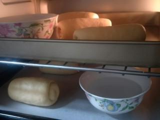 万能早餐-牛奶哈斯,放在烤盘上要有充分的空间进行二发。可以在旁边放两盆热水发的更加好。