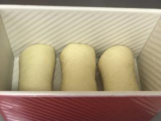 港式吐司,依次完成所有后放入吐司盒,摆放时留出一定空隙。