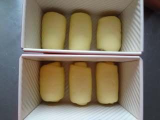 淡奶油吐司,8.自上而下的卷起放入吐司盒中开始二发37度75%