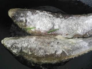 红烧舌鳎鱼,鱼放入锅内煎一下