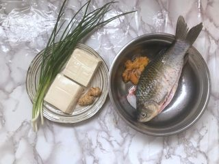 汤白鱼鲜好美味,鲫鱼豆腐汤,1.把鲫鱼清洗干净,刮鳞去鱼腹黑膜。鱼蛋和鱼泡可以清洗后一起煮。豆腐切小块,姜切片,葱切成葱花。