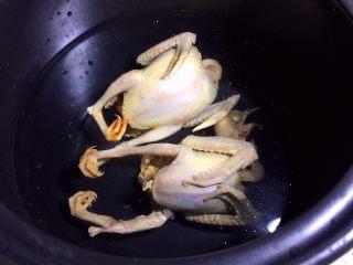 红枣枸杞乳鸽汤,乳鸽放入砂锅中,添适量清水