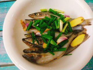 香酥沙丁鱼,将鱼放入一个大碗里,依次加入香葱,姜片。