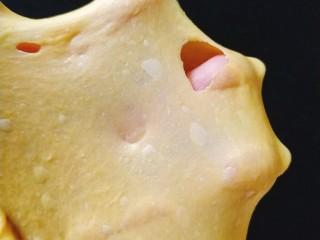 南瓜泥奶香吐司,揉到扩展状态,所谓扩展状态就是可以拉抻出厚的膜,但是用手指戳破,洞口边缘是锯齿状;