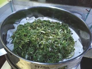 白蒿蒸麦饭,蒸好后取出,趁热用筷子挑散,凉后容易结疙瘩