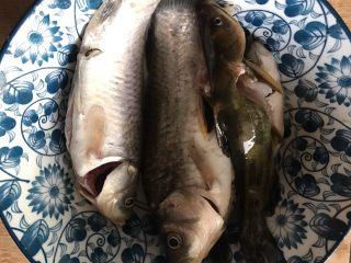 酸菜炖野生杂鱼,杂鱼宰杀好洗净
