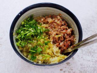 酸菜猪肉粉嫩饺子,把切碎的酸菜和香菜放入搅拌好的肉馅里。