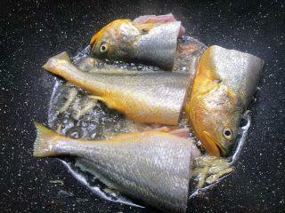 酸菜炖黄鱼,锅里放入适量油,烧至8成热,把姜丝放入爆香,再把黄鱼放入煎制。