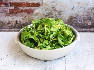 荠菜鸡肉馄饨,将荠菜清洗干净。 荠菜虽然是野菜,但是它的功效一点也不低,不仅可以帮助消化,润肠通便,还可以明目,防癌抗癌等等,具有很高的功效。我们在吃荠菜的时候要注意体质虚寒的人还有腹泻的人不要吃荠菜。孕妇禁食。