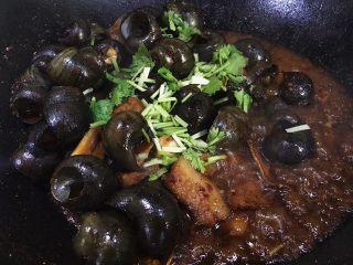 五花肉香焖田螺,最后撒入香菜即可出锅