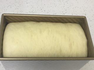 红枣吐司面包,面团发至九分满,盖上盖子。
