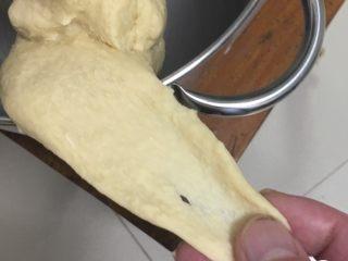 红枣吐司面包,启动厨师机揉面,中速5分钟,转高速5分钟,面团起筋可以拉开。