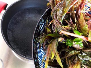鲍鱼干贝XO酱拌香椿皮蛋豆腐,水开后放入香椿