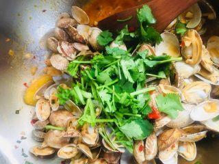 辣炒花蛤,撒上香菜